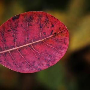 自然美にふれて 一気にこの秋ステージアップです♡