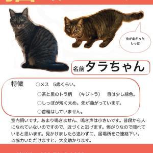 【札幌・迷子】タラちゃんを探しています!