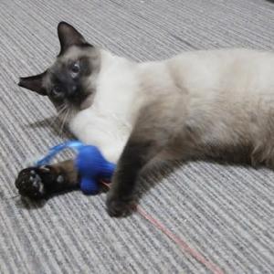 ゆづるの猫付き合い