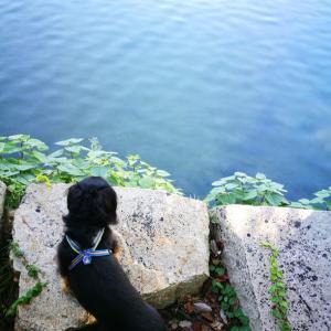 犬の首輪をピカピカにする方法&ウタマロのかしこい使い方