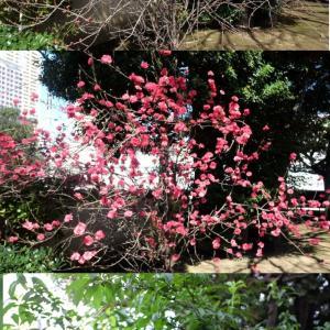 日暮里、 谷中霊園、上野公園 テクテクウォーキング その3