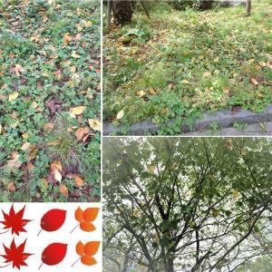 小さな秋を見つけに・・・。その②