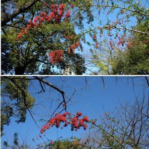 冬に映える赤い実