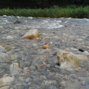 岐阜県恵那漁協管内、第二解禁は川上川での釣行!