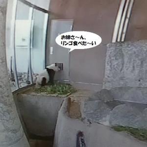 ダダっ子に変身(笑)