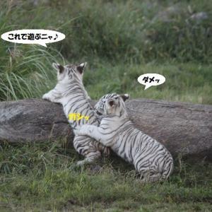 うんニャー、ふんニャーの戦い(笑)