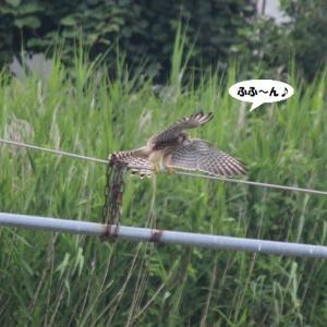 野鳥の縄張り争いを初めて見た!