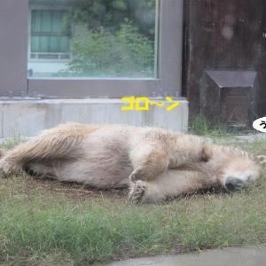 茶色いクマに変身(笑)
