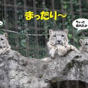 はしゃぎ疲れた3兄弟(笑)