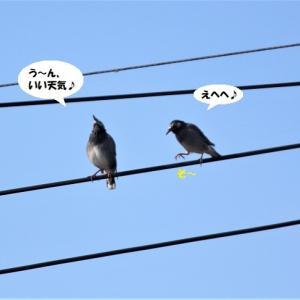 親鳥はクール(笑)