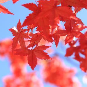 紅葉と初釜