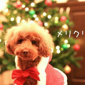 クリスマスは…
