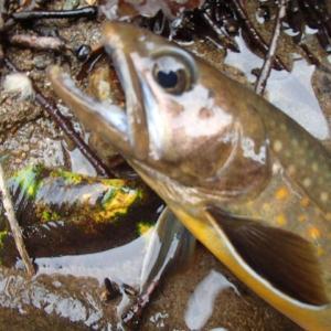 途方に暮れつつ岩魚を釣る