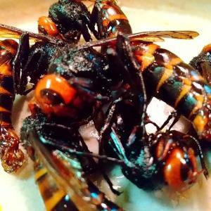 食卓のスズメバチ