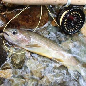 尺岩魚の季節