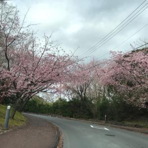 花粉症の症状がひどくなり、1日早く伊豆から帰ってきました( ˃ ˄ ˂̥̥ )きついです!
