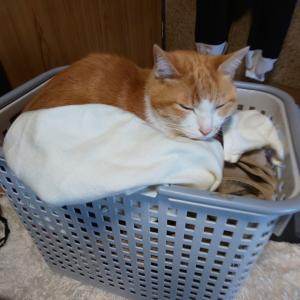 洗濯物の上がフカフカだった