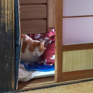 猫 肝疾患の疑いとエコー