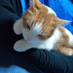 猫のお気に入り、腕枕と足枕