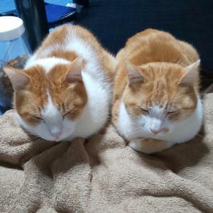 兄弟猫のシンクロニシティ