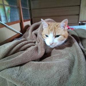 夏だけど、毛布にくるまる