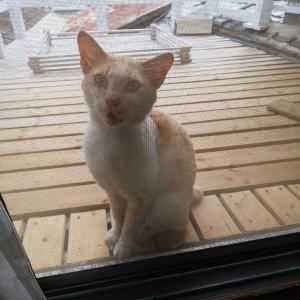 放浪の旅猫、サスケさん