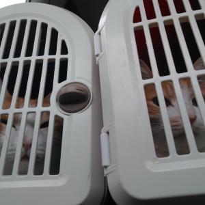 猫がハゲた日 兄弟で病院受診