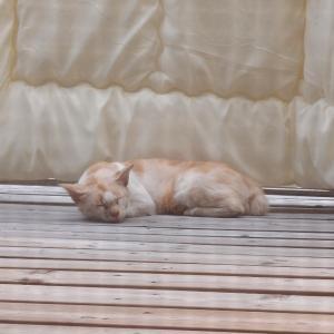野良猫、サスケさんの避暑地