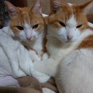 野良猫 サトイモ兄弟の食欲