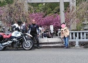 滋賀県長浜市 伊香具神社の八重桜と古戦場賤ケ岳