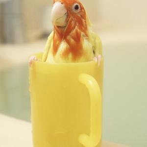 コップ風呂