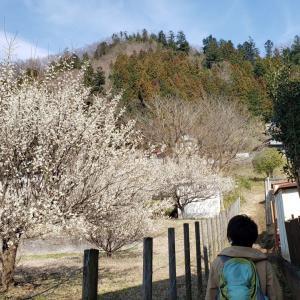 花見月の花探し(八重山104回目)(2020年3月1日)