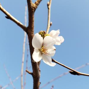庭の春(2021年3月19日)