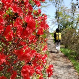 春の花を巡る八重山(八重山114回目)(2021年4月11日)