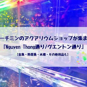ホーチミンのアクアリウムショップが集まる『Nguyen Thong通り/グエントン通り』【金魚・熱帯魚・水槽・その他用品も】