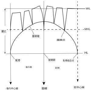 スカート原型のヒップラインの位置が、デザイン線と運動量を決める