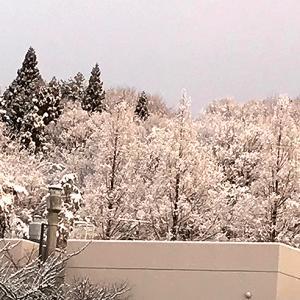 束の間の雪?