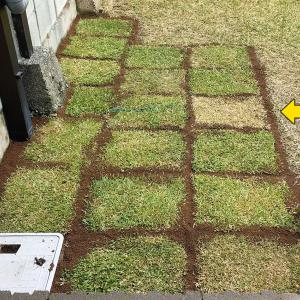 芝の張替え