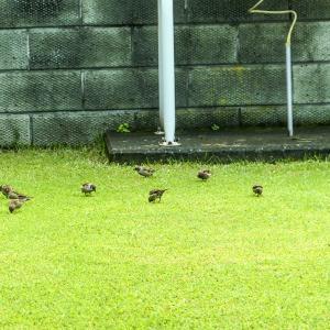 チュンコ便り 〜芝生が賑わってた!〜