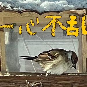 チュンコ便り 〜君の名は…〜