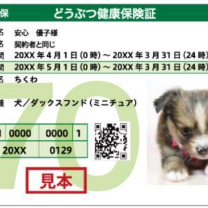マロン日記 〜ペット保険〜