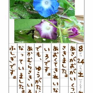 朝顔絵日記 開花♪