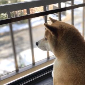 看板犬の鏡って本当?