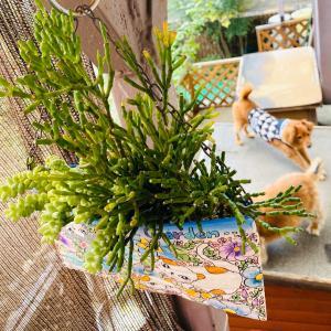 魔除けハーブの花とワントリオのチュールな時間