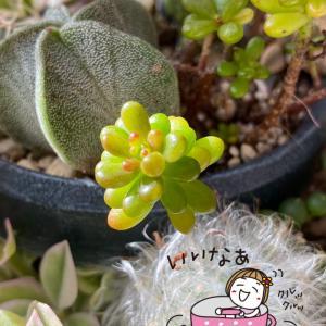 デッキのタニパトと庭のバラ(*゚▽゚)ノ