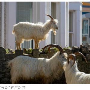 各国の街中に出没する動物とキャロンとチュッチュのドンキー