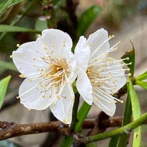 お花達と水玉キラキラ