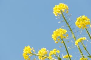 花粉は飛ぶがマスクがない