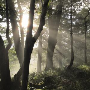 熊野修験三十三周年奥駈修行。