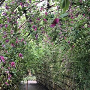 見頃を迎えた萩のトンネルを歩く!向島百花園